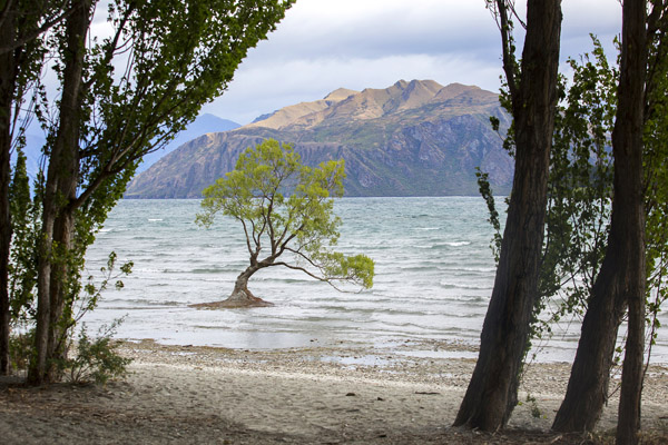 I was so struck by this unusual little lonesome tree growing quite unexpectedly out of Lake Wanaka.