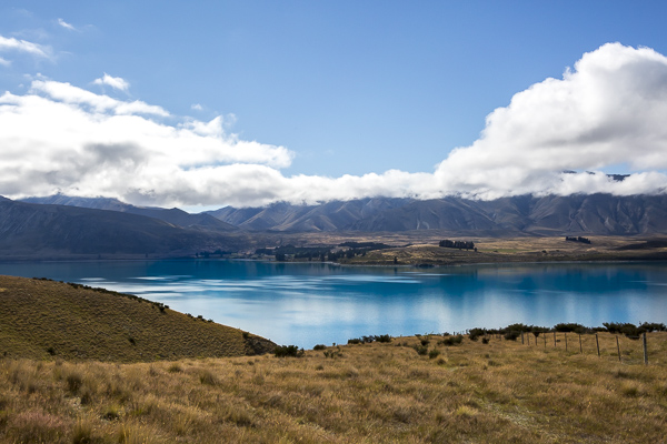 Awed by Lake Tekapo's remarkable color, I learned that it's a product of glacial sediment turned into fine dust particles which are suspended in water. When light and the blue of the sky reflect off these particles, it creates the unusually bright blue hue.